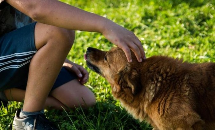 Dogs Can Sniff Out Low Blood Sugar: Study