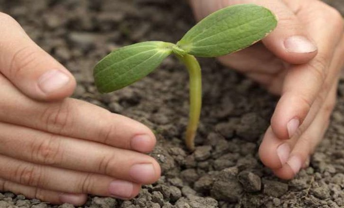 Delhi Government To Plant 10 Lakh Trees This Year