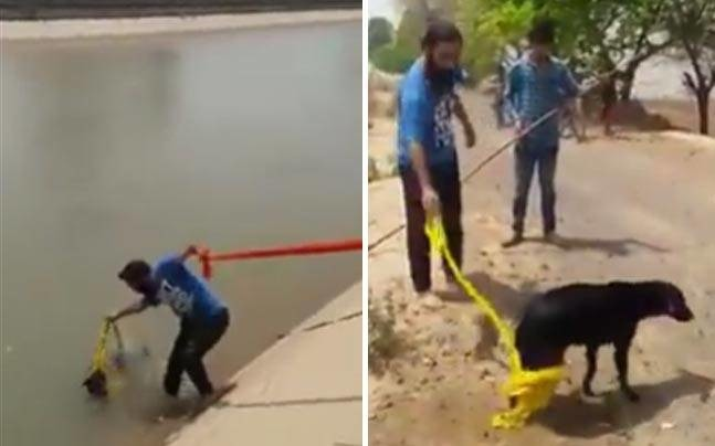 Kudos! Sikh Man Takes Off His Turban To Rescue A Drowning Dog!