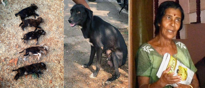 Woman In Bangalore Kills 8 Puppies To Teach Their Mother A Lesson