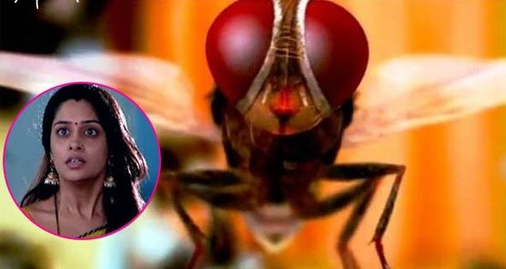 WTF! 'Sasural Simar Ka' Gets Too Far As Main Protagonist Turns Into A Fly!
