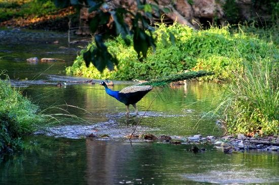 Unexplored Places In India - Nelliyampathy
