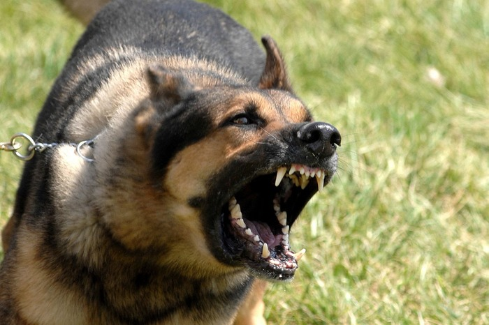 The Most Dangerous Dog Breeds On Planet