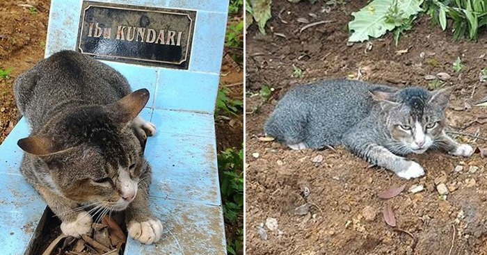 Grieving Cat Spent A Year Sitting By Owner's Grave In Indonesia