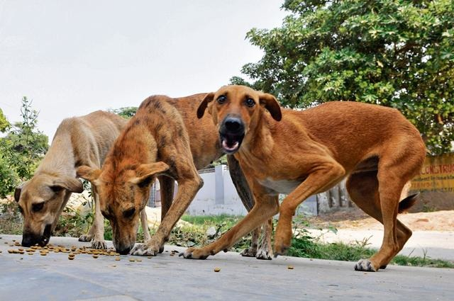 Disgusting: Kerala Protesters Kill Stray Dogs, Parade Them On Poles In Public
