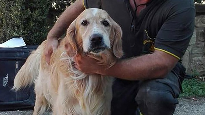 This Golden Retriever Dog Was Pulled Alive From Italy Earthquake Rubble After 9 Days