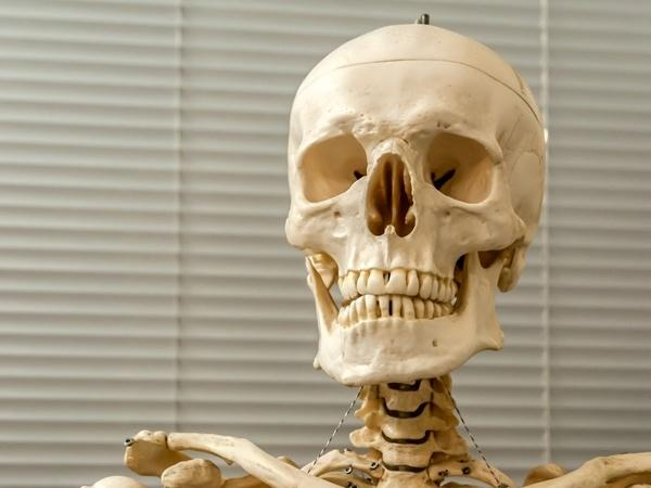 7 Fascinating Facts about the Skeletal System | Healthy Living ...