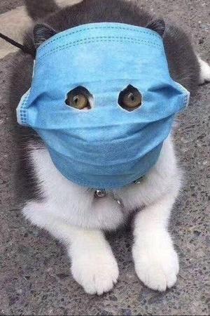Coronavirus pets