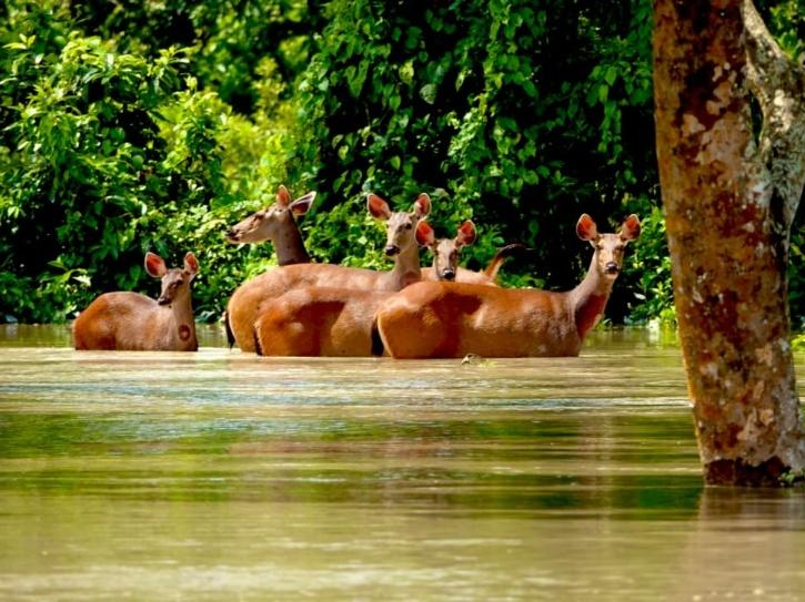 kaziranga national park floods 2020