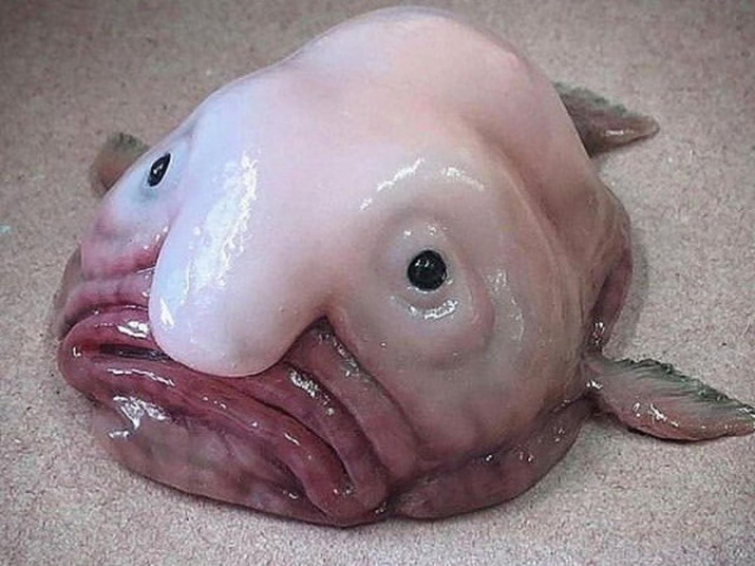 Strange Looking Animals On The Planet