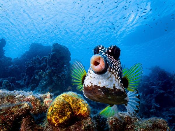fish box in Curaçao, Dutch